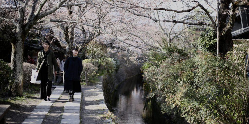 ซากุระแรก ฝาย เกียวโต